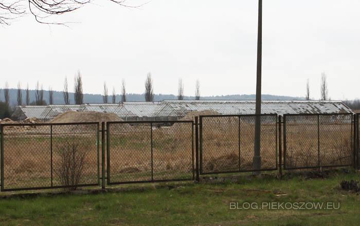 Szklarnie w Piekoszowie - kwiecień 2012